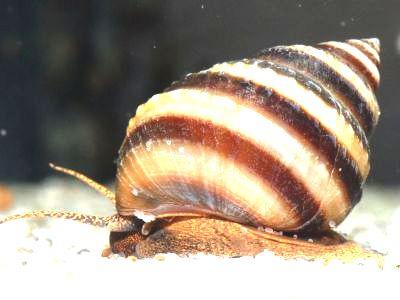 Aquarium Glaser, июнь Attachment